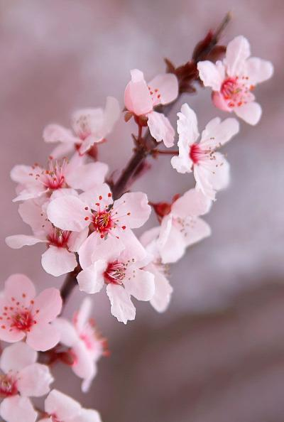 What Is Ikebana